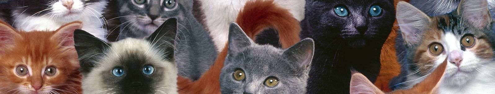 banner-many-cats.jpg