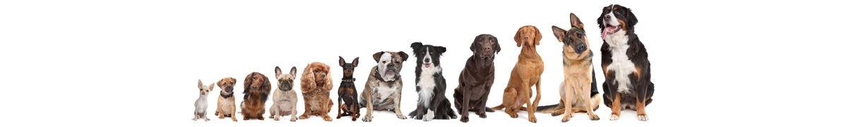 dog-breeds-2.jpg